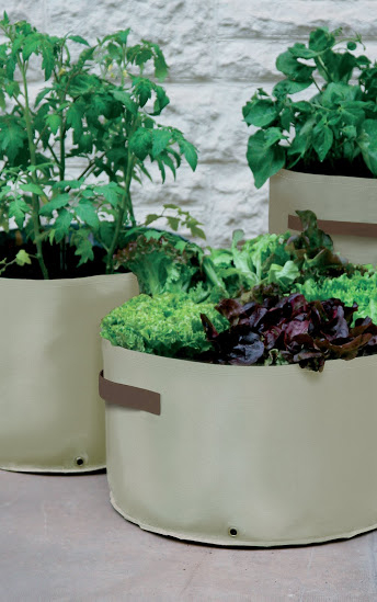 Haxnicks Vegetable Patio Planter Pack Of 3 163 12 5