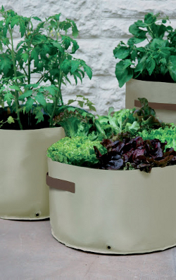 Image of Haxnicks Vegetable Patio Planter - Pack of 3