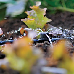 Small Image of Hozelock Micro Irrigation In line Adjustable Dripper - 2786