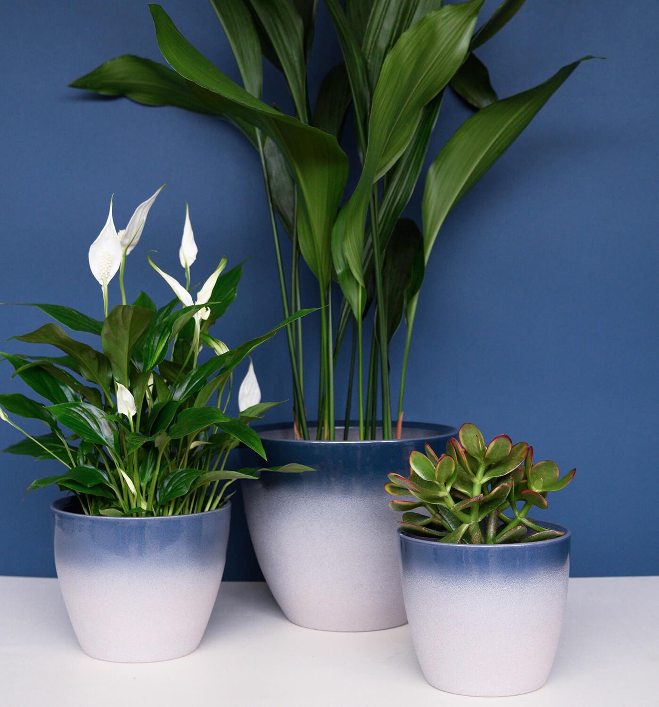 Ivyline Turno 24cm Indoor Plant Pot In Ocean 163 21 44
