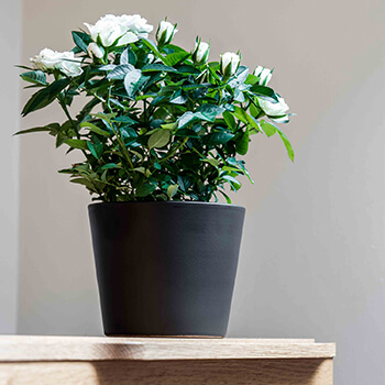 Image of Ivyline 440 Series 17cm Indoor Plant Pot in Matte Graphite