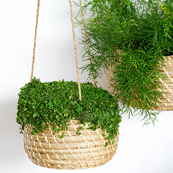 Image of Ivyline Hanging Seagrass Planter Set of 2