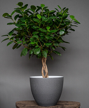 Image of Ivyline Turno 24cm Indoor Plant Pot in Granite