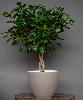 Image of Ivyline Turno 24cm Indoor Plant Pot in Cement