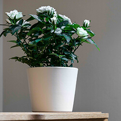 Small Image of Ivyline 440 Series 13cm Indoor Plant Pot in Antique White