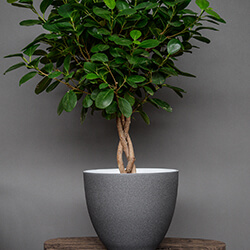 Small Image of Ivyline Turno 24cm Indoor Plant Pot in Granite