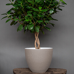 Small Image of Ivyline Turno 24cm Indoor Plant Pot in Cement