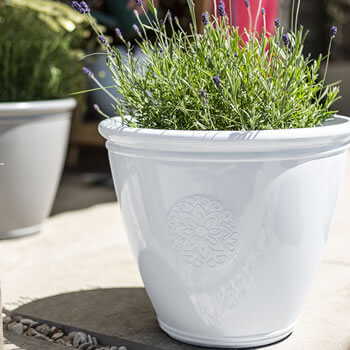 Image of Kelkay Plant Avenue Trad. Collection Small Eden Emblem Pot in White