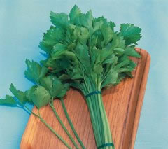 Image of Kintsai Chinese Celery plants