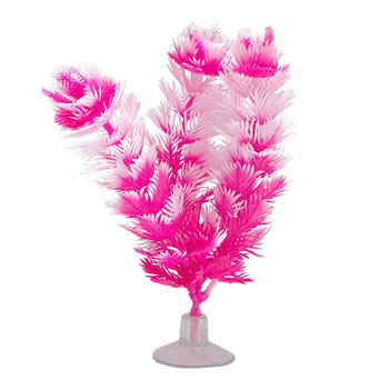 Image of Marina Betta Foxtail Plant