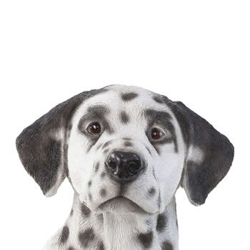 Extra image of Large Realistic 50cm Sitting Dalmatian Dog Statue Garden Ornament