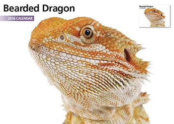 Image of Bearded Dragon 12 Month 2016 A4 Calendar