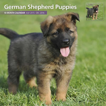 Image of German Shepherd Puppies - 2016 18 Month Traditional Calendar