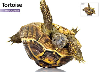 Image of Tortoise 12 Month 2016 A4 Calendar
