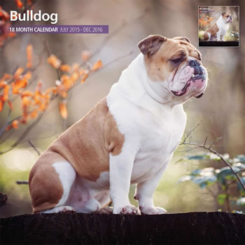 Image of Bulldog - 2016 18 Month Traditional Calendar