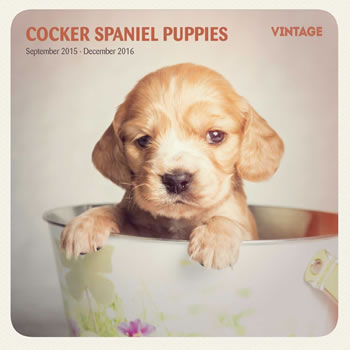 Image of Cocker Spaniel 16 Month 2016 Vintage Wall Calendar