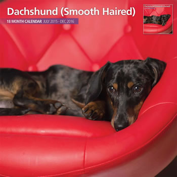 Image of Smooth Haired Dachshund - 2016 18 Month Traditional Calendar