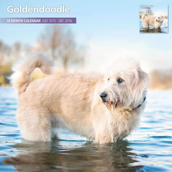 Image of Goldendoodle - 2016 18 Month Traditional Calendar