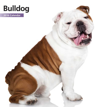Image of Bulldog 12 Month 2016 Mini Calendar