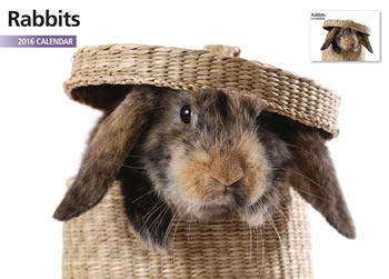 Image of Rabbits 12 Month 2016 A4 Calendar