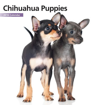 Image of Chihuahua Puppies 12 Month 2016 Mini Calendar