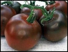 Image of Black Russian Tomato plants