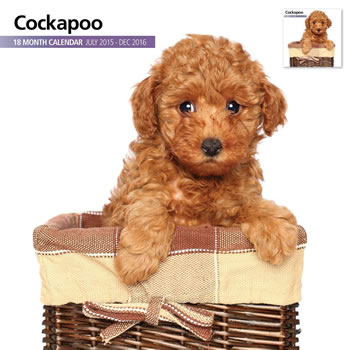 Image of Cockapoo - 2016 18 Month Calendar