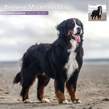 Image of Bernese Mountain Dog - 2016 18 Month Traditional Calendar