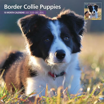 Image of Border Collie Puppies - 2016 18 Month Traditional Calendar