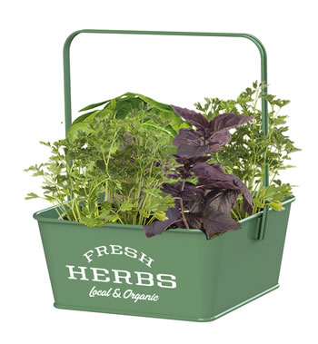 Image of Nutley's Green Fresh Herb Caddies with Handle Retro Organic Fresh