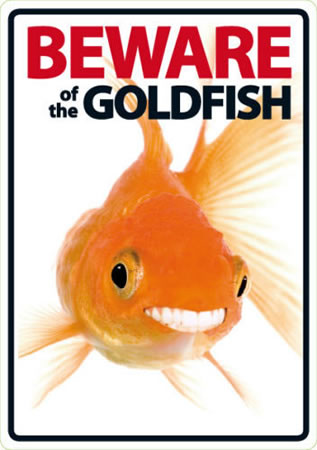Image of Beware Of The Goldfish