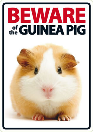 Image of Beware Of The Guinea Pig