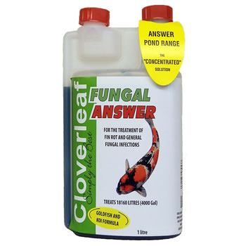 Image of Cloverleaf Fungal Answer 1L