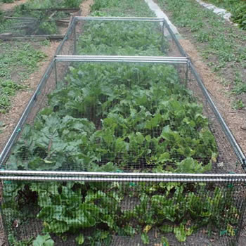 Image of Standard Strawberry Cage 46cm high x 122cm wide x 549cm long with Bird Netting