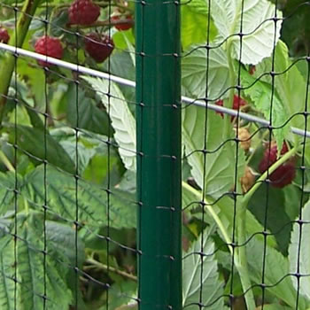 Image of Deluxe Strawberry Cage 46cm high x 122cm wide x 366cm long with Butterfly Netting