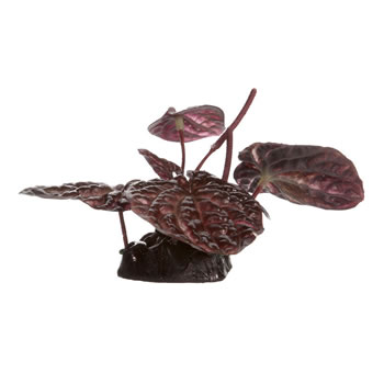 Image of Fluval Small Red Lotus Plant 10cm
