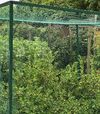 Extra image of Bird and Pond Netting  5m x 2m* Green Woven