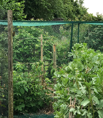 Image of Bird Netting Green Woven Garden: Fruit Cages, Ponds: 16m* wide, 5m