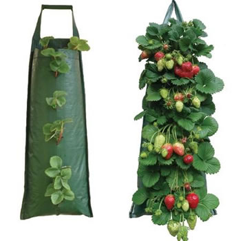 Image of Nutley's Hanging Strawberry Flower Bag