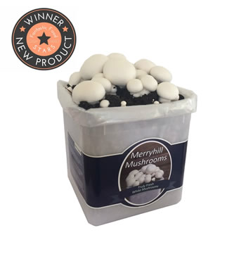 Image of Nutley's Fresh Grow Your Own Merryhill White Mushroom Kit spawned & growing