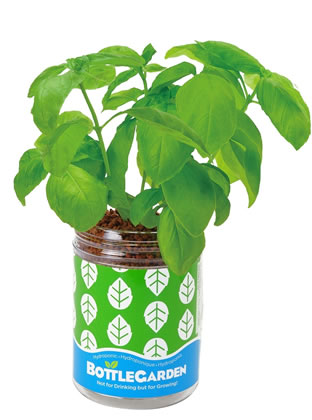 Extra image of Nutley's Basil Bottle Garden Hydroponics Grow Your Own Gift