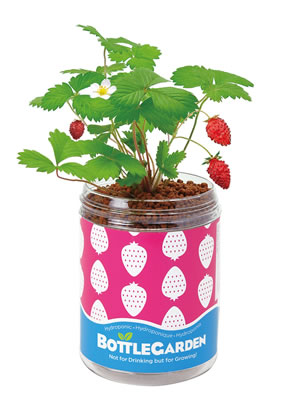 Extra image of Nutley's Wild Strawberry Bottle Garden Hydroponics Grow Your Own Gift
