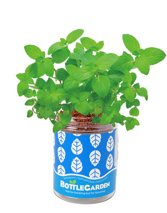 Extra image of Nutley's Mint Bottle Garden Hydroponics Grow Your Own Gift