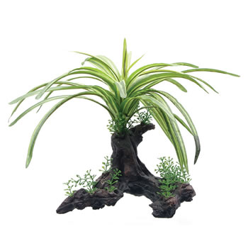 Image of Fluval Fountain Plant on Root 25cm