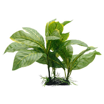 Image of Fluval Yellow Striped Spathiphyllum Plant 22cm