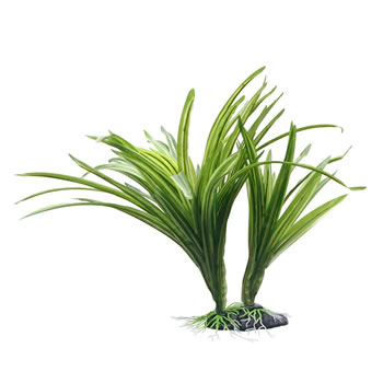 Image of Fluval Striped Acorus Plant 25cm