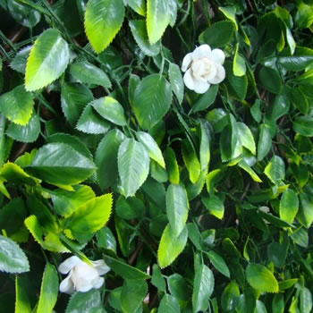 Image of WitchHedge Summer Extendable Hedging 1m x 2m (SEXTHD)