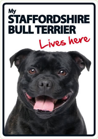 Image of Staffordshire Bull Terrier - Lives Here A5 Plastic Sign