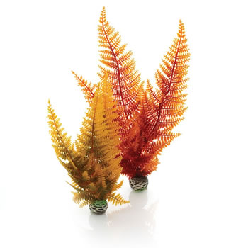 Image of BiOrb Autumn Ferns Plant Pack