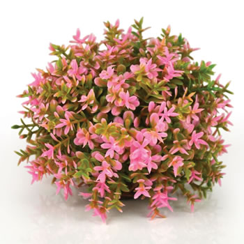 Image of BiOrb Topiary Ball - Pink